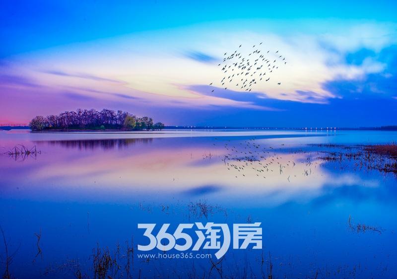 旭辉铂悦庐州府周边实景图(2017.8.1)